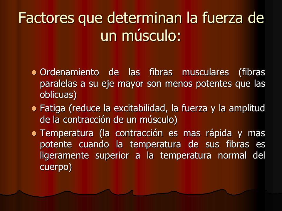 Ordenamiento de las fibras musculares (fibras paralelas a su eje mayor son menos potentes que las oblicuas) Ordenamiento de las fibras musculares (fib