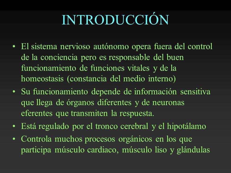 INTRODUCCIÓN El sistema nervioso autónomo opera fuera del control de la conciencia pero es responsable del buen funcionamiento de funciones vitales y
