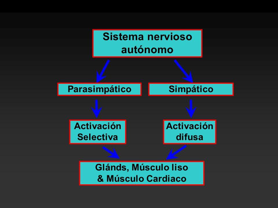 Sistema nervioso autónomo Activación Selectiva Activación difusa Glánds, Músculo liso & Músculo Cardiaco ParasimpáticoSimpático