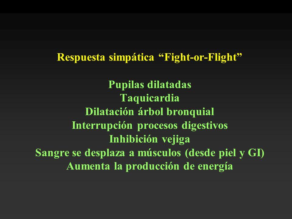 Respuesta simpática Fight-or-Flight Pupilas dilatadas Taquicardia Dilatación árbol bronquial Interrupción procesos digestivos Inhibición vejiga Sangre