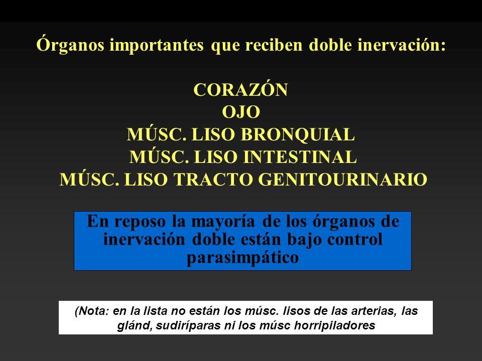 Órganos importantes que reciben doble inervación: CORAZÓN OJO MÚSC. LISO BRONQUIAL MÚSC. LISO INTESTINAL MÚSC. LISO TRACTO GENITOURINARIO En reposo la