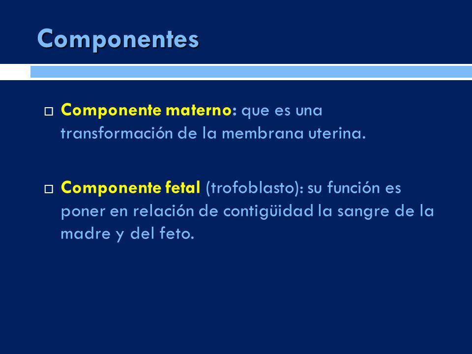 Componentes Componente materno: que es una transformación de la membrana uterina. Componente fetal (trofoblasto): su función es poner en relación de c