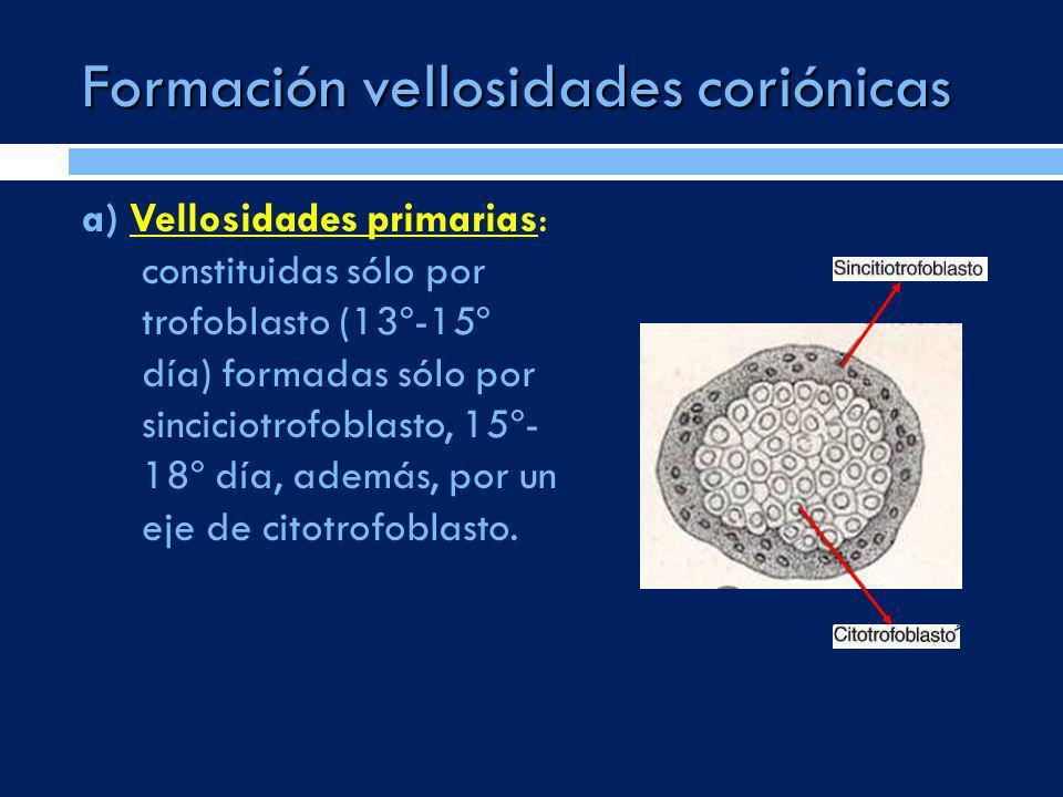 Formación vellosidades coriónicas a) Vellosidades primarias: constituidas sólo por trofoblasto (13º-15º día) formadas sólo por sinciciotrofoblasto, 15