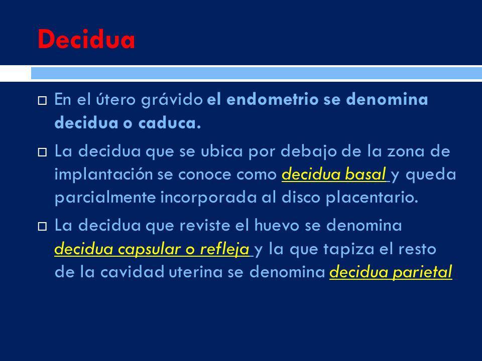 Decidua En el útero grávido el endometrio se denomina decidua o caduca. La decidua que se ubica por debajo de la zona de implantación se conoce como d