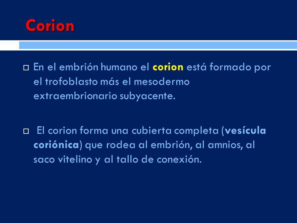 Corion En el embrión humano el corion está formado por el trofoblasto más el mesodermo extraembrionario subyacente. El corion forma una cubierta compl