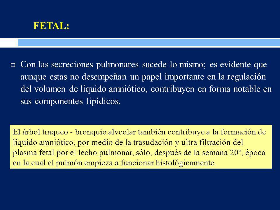 FETAL: Con las secreciones pulmonares sucede lo mismo; es evidente que aunque estas no desempeñan un papel importante en la regulación del volumen de