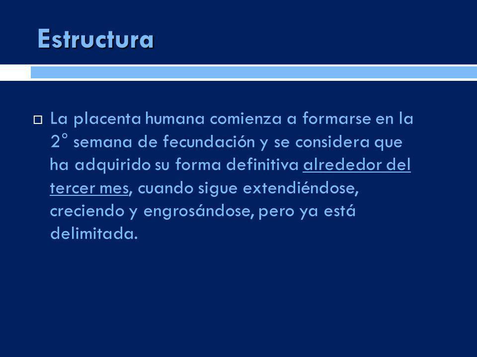 Estructura La placenta humana comienza a formarse en la 2° semana de fecundación y se considera que ha adquirido su forma definitiva alrededor del ter