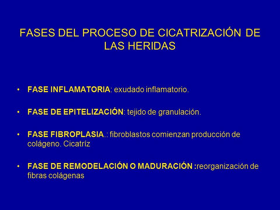 FASES DEL PROCESO DE CICATRIZACIÓN DE LAS HERIDAS FASE INFLAMATORIA: exudado inflamatorio. FASE DE EPITELIZACIÓN: tejido de granulación. FASE FIBROPLA