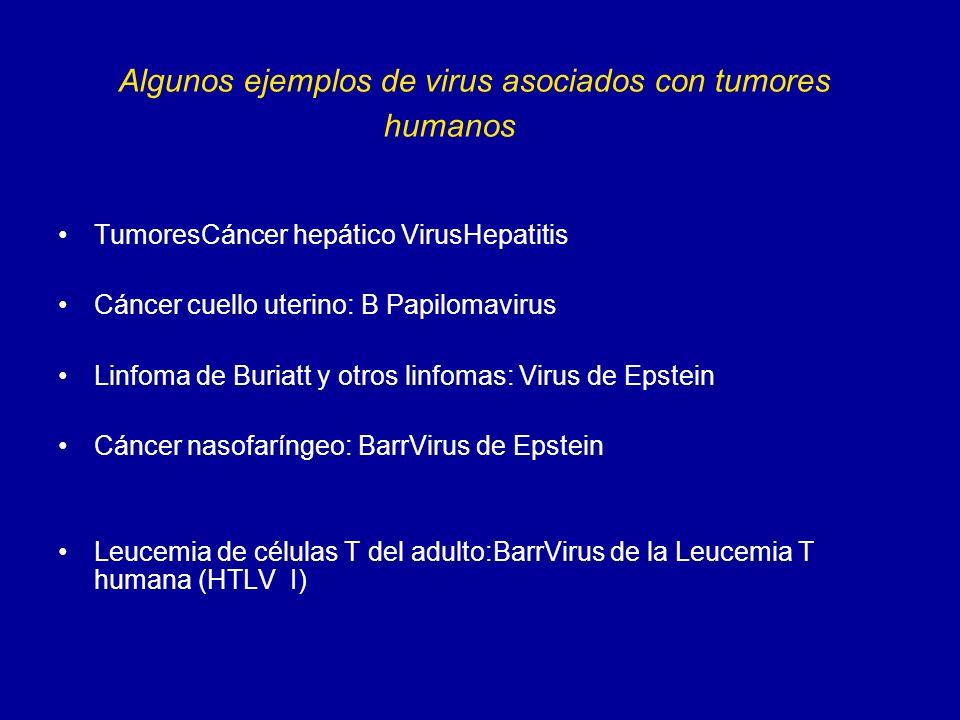Algunos ejemplos de virus asociados con tumores humanos TumoresCáncer hepático VirusHepatitis Cáncer cuello uterino: B Papilomavirus Linfoma de Buriat
