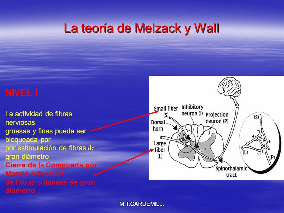 M.T.CARDEMIL J. La teoría de Melzack y Wall NIVEL I La actividad de fibras nerviosas gruesas y finas puede ser bloqueada por por estimulación de fibra