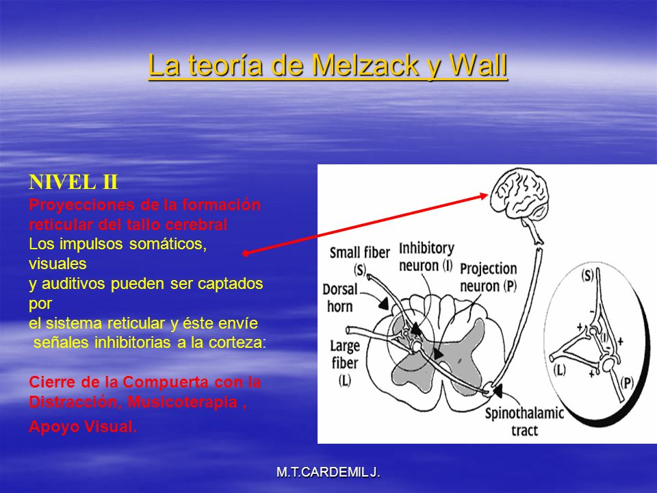 M.T.CARDEMIL J.La teoría de Melzack y Wall NIVEL III Proyecciones de Corteza cerebral y Tálamo.
