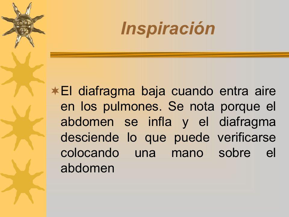 Inspiración El diafragma baja cuando entra aire en los pulmones. Se nota porque el abdomen se infla y el diafragma desciende lo que puede verificarse
