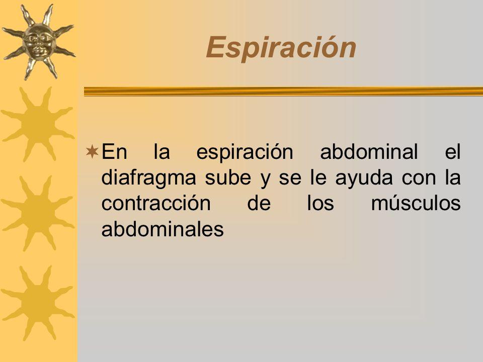 Espiración En la espiración abdominal el diafragma sube y se le ayuda con la contracción de los músculos abdominales