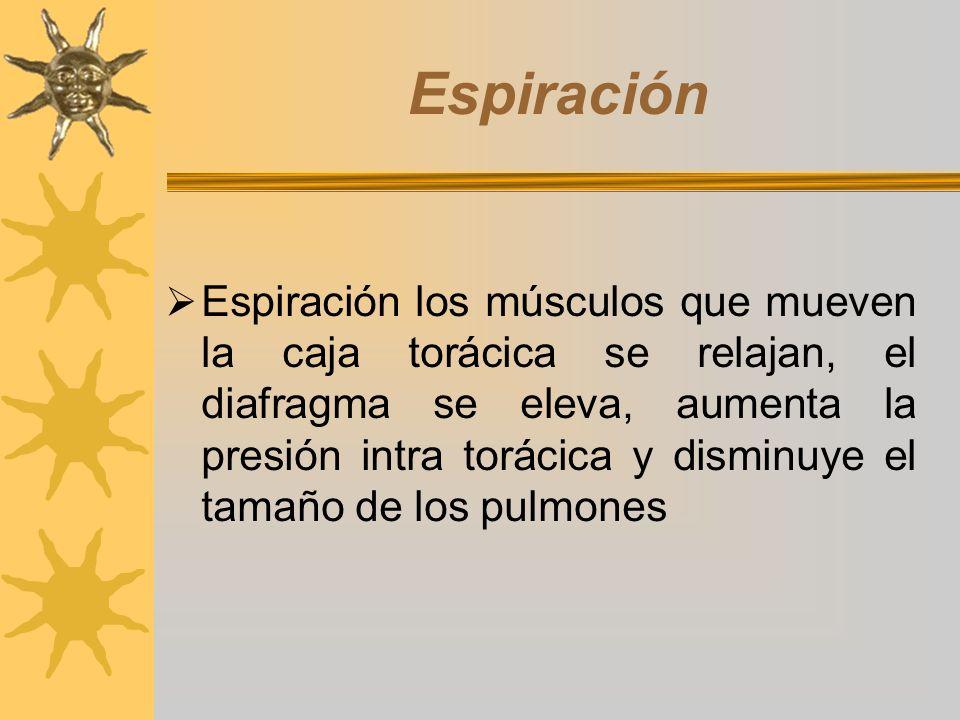 Espiración Espiración los músculos que mueven la caja torácica se relajan, el diafragma se eleva, aumenta la presión intra torácica y disminuye el tam