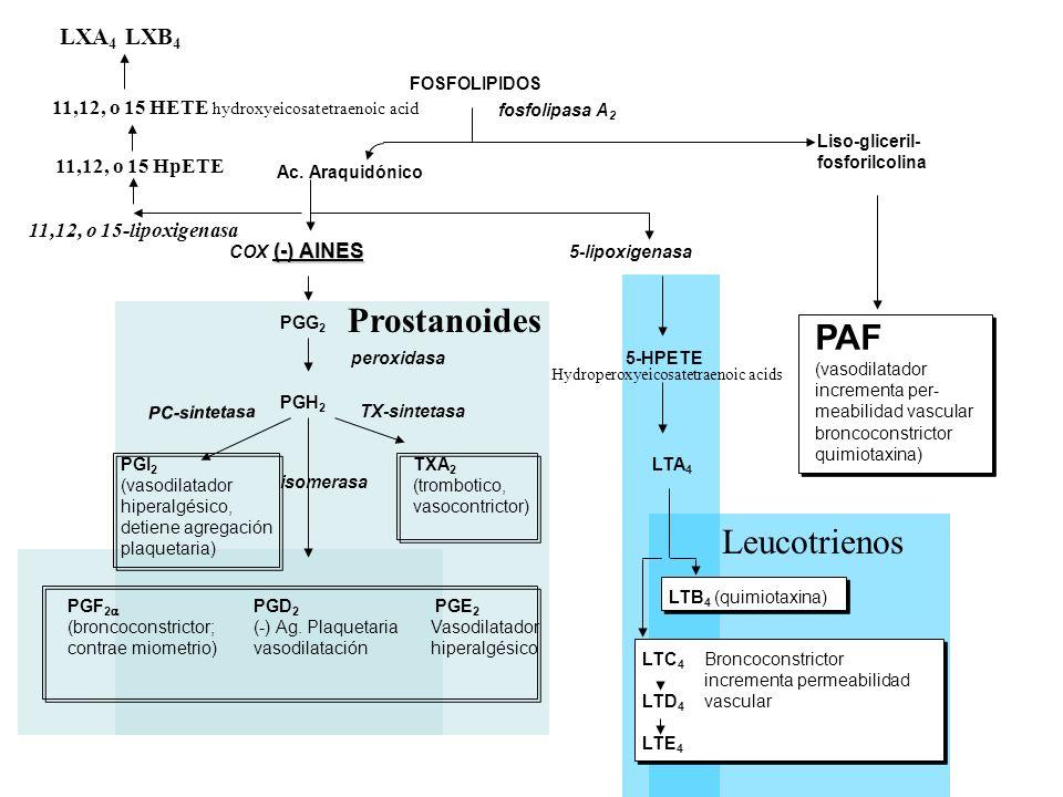 Leucotrienos Prostanoides Ac. Araquidónico Liso-gliceril- fosforilcolina FOSFOLIPIDOS fosfolipasa A 2 (-) AINES COX (-) AINES 5-lipoxigenasa PGG 2 PGH