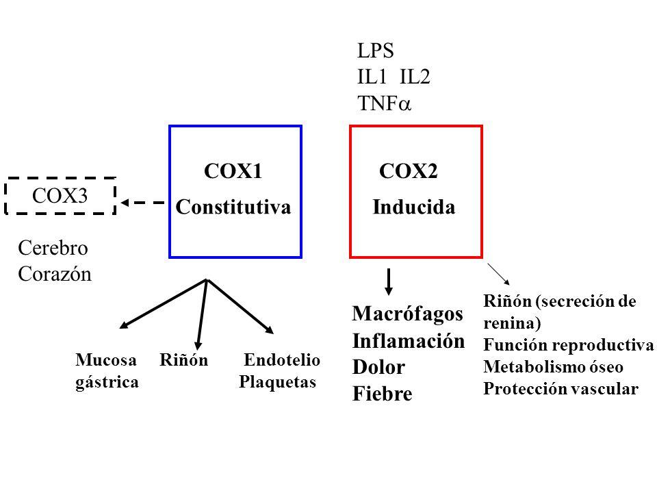 Mucosa Riñón Endotelio gástrica Plaquetas COX1 COX2 ConstitutivaInducida LPS IL1 IL2 TNF Inflamación Dolor Fiebre Macrófagos COX3 Cerebro Corazón Riñón (secreción de renina) Función reproductiva Metabolismo óseo Protección vascular