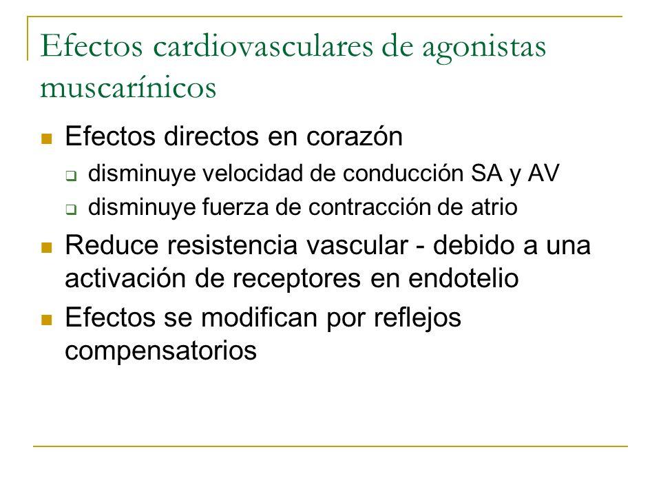 Efectos cardiovasculares de agonistas muscarínicos Efectos directos en corazón disminuye velocidad de conducción SA y AV disminuye fuerza de contracci