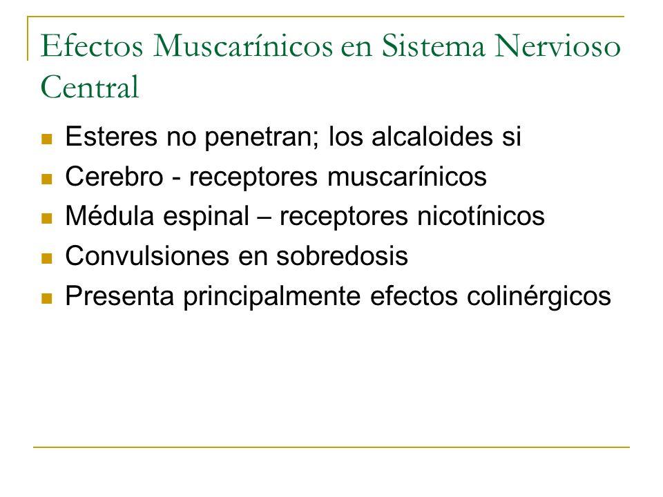 Efectos Muscarínicos en Sistema Nervioso Central Esteres no penetran; los alcaloides si Cerebro - receptores muscarínicos Médula espinal – receptores