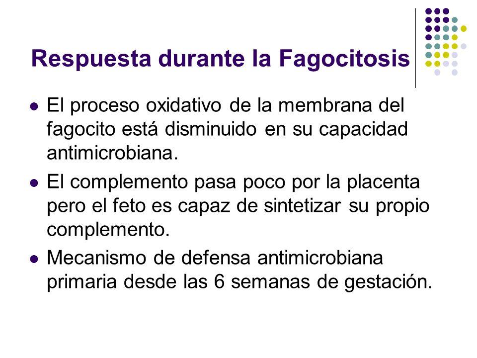 Respuesta durante la Fagocitosis El proceso oxidativo de la membrana del fagocito está disminuido en su capacidad antimicrobiana. El complemento pasa