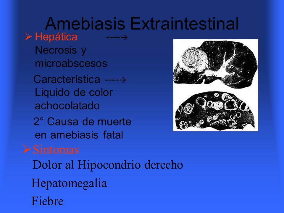 Amebiasis Extraintestinal Hepática ---- Necrosis y microabscesos Característica ---- Liquido de color achocolatado 2° Causa de muerte en amebiasis fat