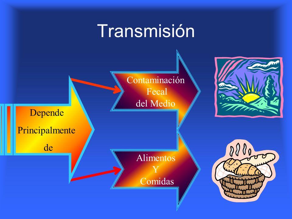 Transmisión Depende Principalmente de Contaminación Fecal del Medio Alimentos Y Comidas