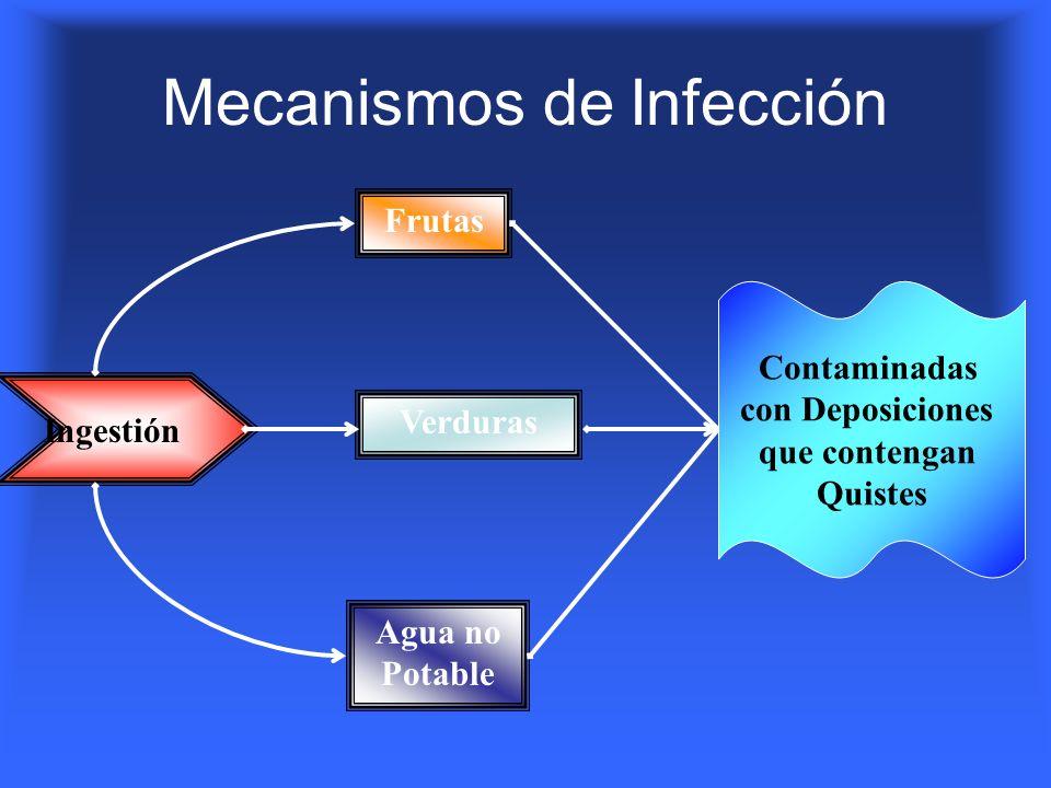 Mecanismos de Infección Ingestión Agua no Potable FrutasVerduras Contaminadas con Deposiciones que contengan Quistes