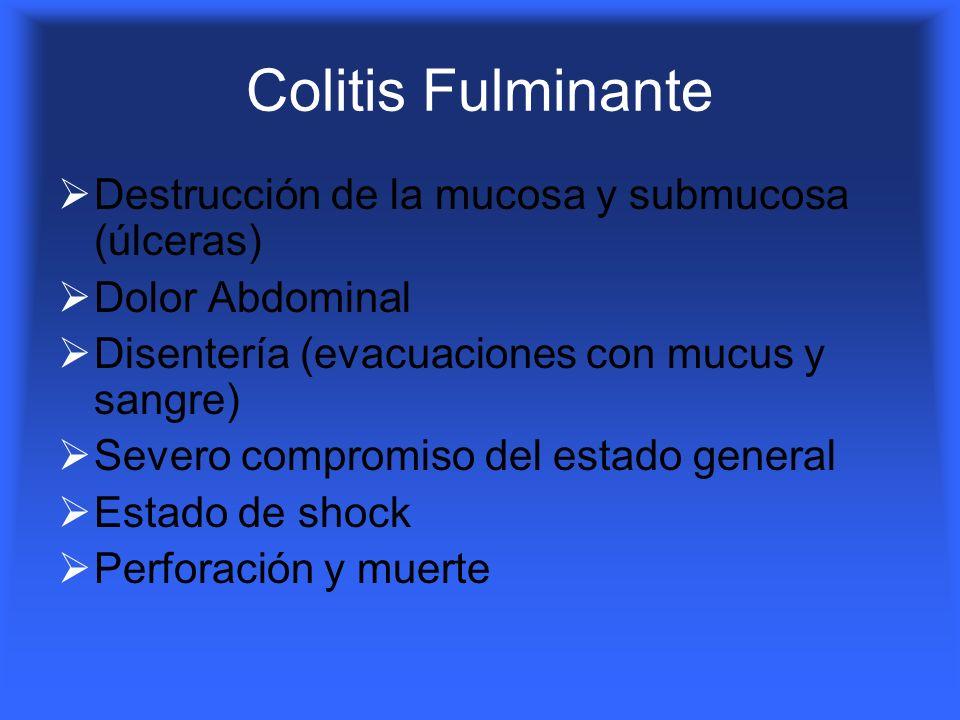 Colitis Fulminante Destrucción de la mucosa y submucosa (úlceras) Dolor Abdominal Disentería (evacuaciones con mucus y sangre) Severo compromiso del e