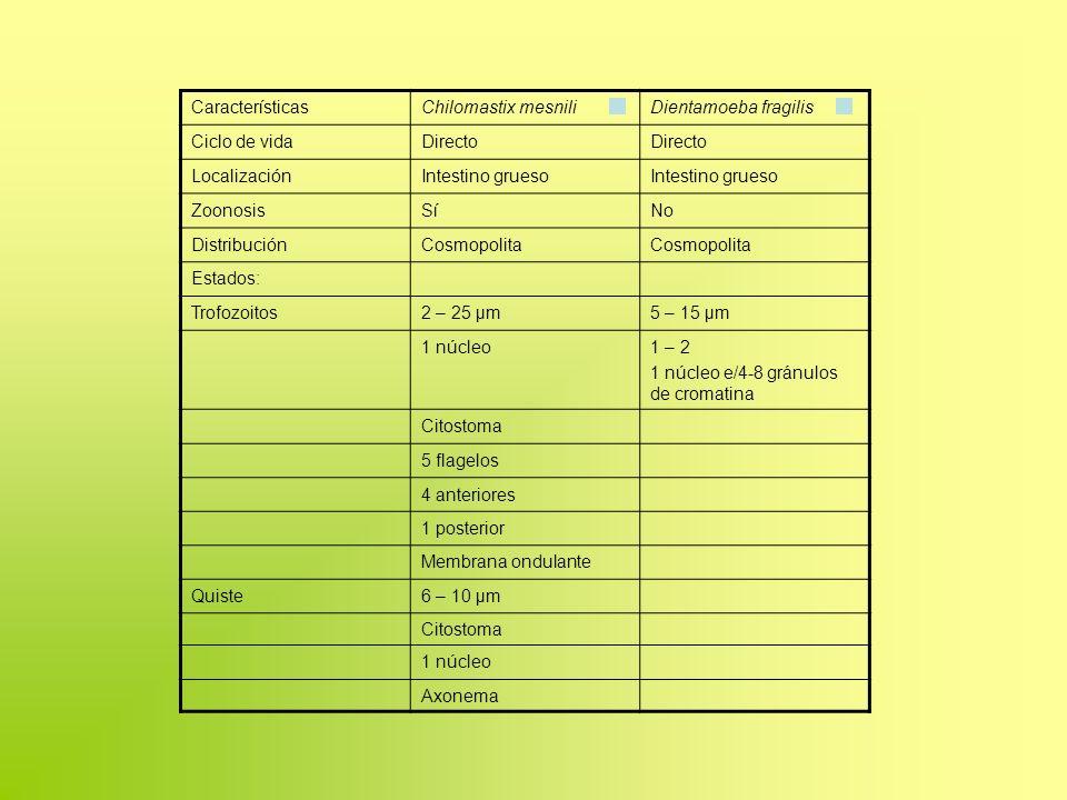 CaracterísticasChilomastix mesniliDientamoeba fragilis Ciclo de vidaDirecto LocalizaciónIntestino grueso ZoonosisSíNo DistribuciónCosmopolita Estados: