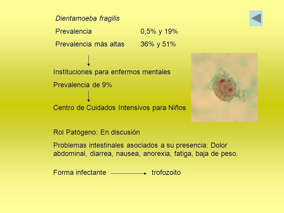 Dientamoeba fragilis Prevalencia0,5% y 19% Prevalencia más altas36% y 51% Instituciones para enfermos mentales Prevalencia de 9% Centro de Cuidados In