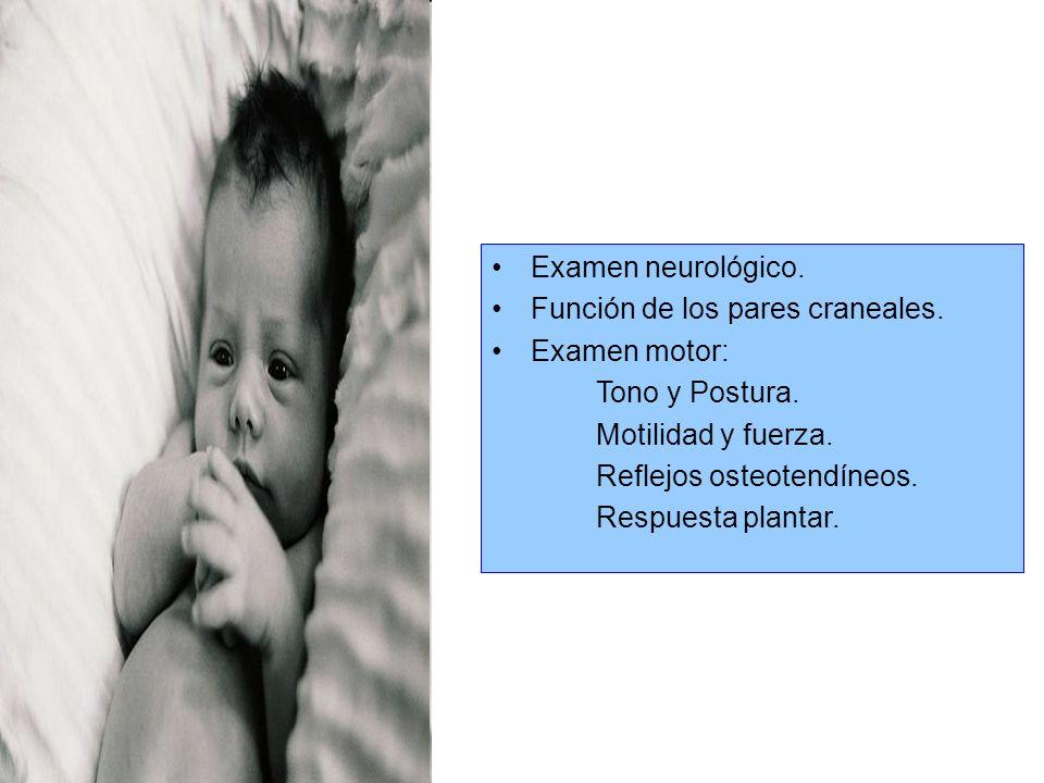 Recién Nacido Fenómenos que hay que explicar a los padres. Examen físico del recién nacido: Piel Cabeza Cara Tórax Abdomen Genitales Extremidades