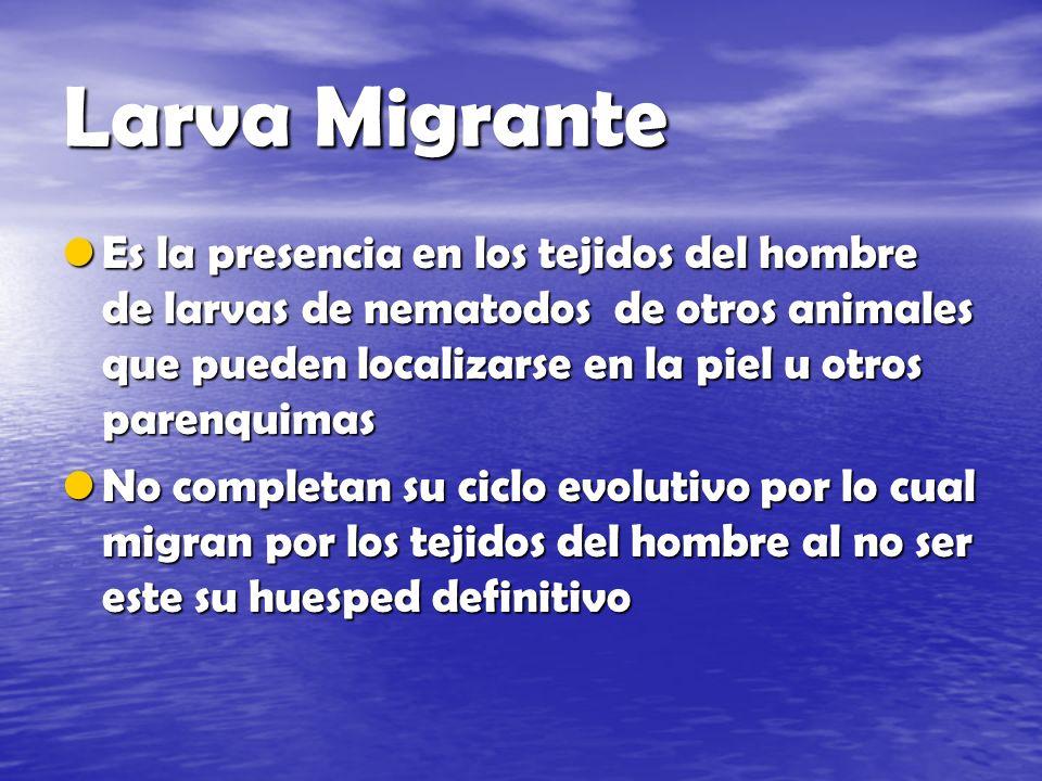 Larva Migrante Es la presencia en los tejidos del hombre de larvas de nematodos de otros animales que pueden localizarse en la piel u otros parenquima