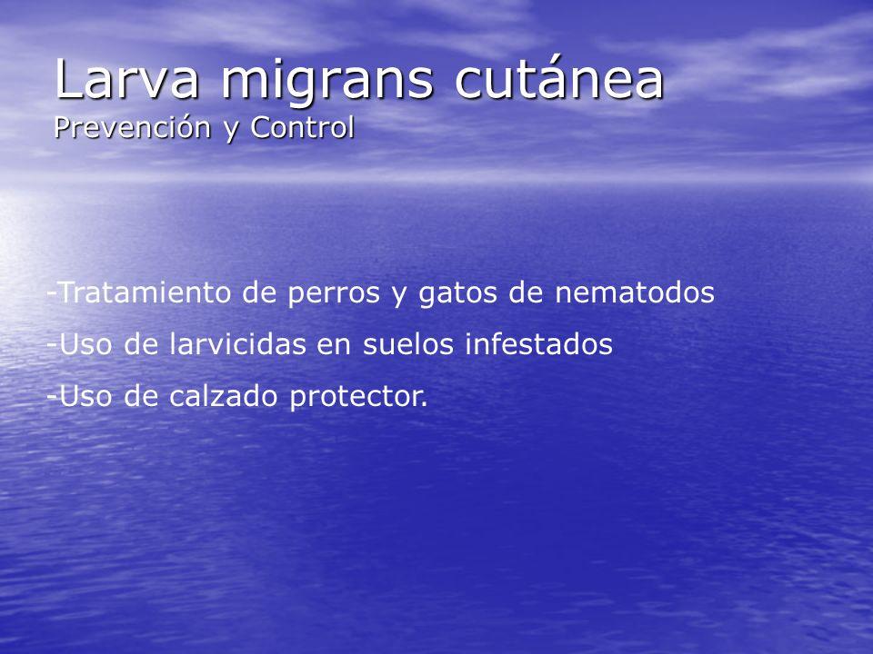 Larva migrans cutánea Prevención y Control -Tratamiento de perros y gatos de nematodos -Uso de larvicidas en suelos infestados -Uso de calzado protect