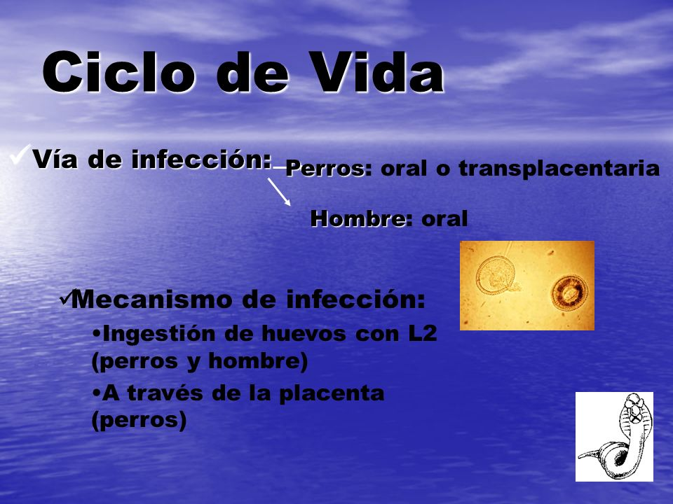 Larva migrans cutánea Tratamiento - Albendazol oral - Tiabendazol tópico