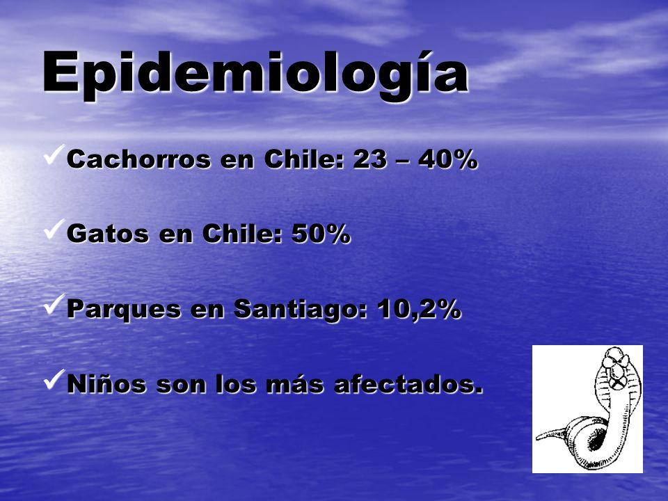 Epidemiología Cachorros en Chile: 23 – 40% Cachorros en Chile: 23 – 40% Gatos en Chile: 50% Gatos en Chile: 50% Parques en Santiago: 10,2% Parques en