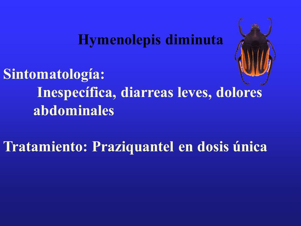 Hymenolepis diminuta Sintomatología: Inespecífica, diarreas leves, dolores abdominales Tratamiento: Praziquantel en dosis única