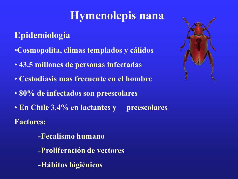 Hymenolepis nana Epidemiología Cosmopolita, climas templados y cálidos 43.5 millones de personas infectadas Cestodiasis mas frecuente en el hombre 80%