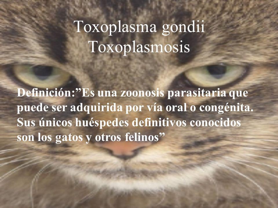 Definición:Es una zoonosis parasitaria que puede ser adquirida por vía oral o congénita. Sus únicos huéspedes definitivos conocidos son los gatos y ot