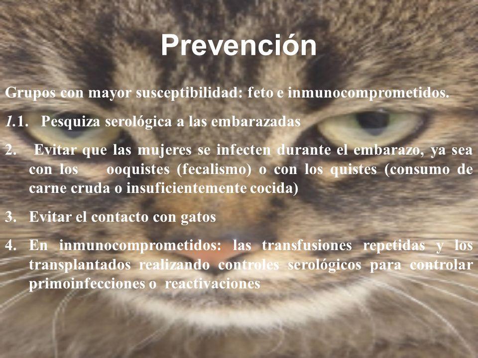 Prevención Grupos con mayor susceptibilidad: feto e inmunocomprometidos. 1.1. Pesquiza serológica a las embarazadas 2. Evitar que las mujeres se infec