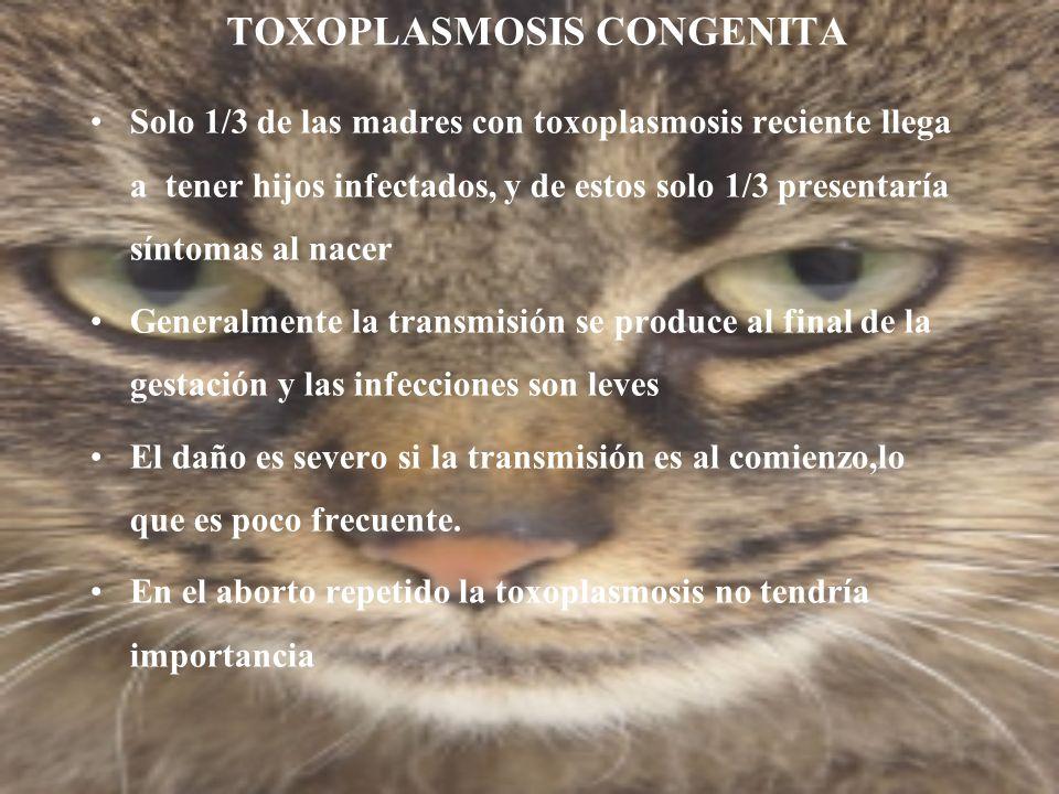 TOXOPLASMOSIS CONGENITA Solo 1/3 de las madres con toxoplasmosis reciente llega a tener hijos infectados, y de estos solo 1/3 presentaría síntomas al