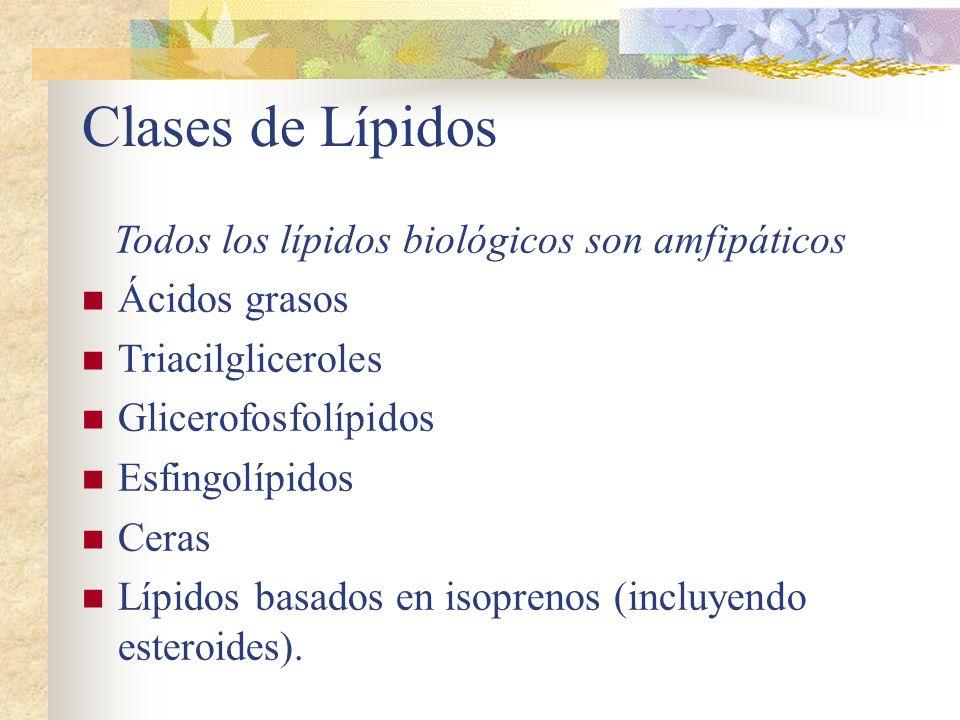 Clases de Lípidos Todos los lípidos biológicos son amfipáticos Ácidos grasos Triacilgliceroles Glicerofosfolípidos Esfingolípidos Ceras Lípidos basado