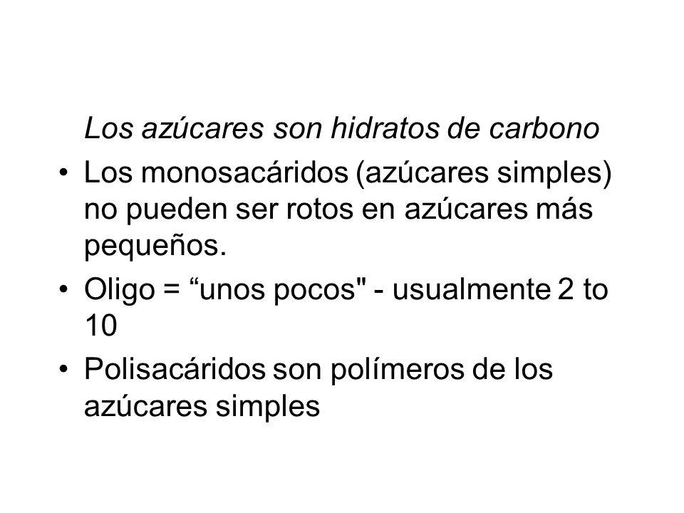 Los azúcares son hidratos de carbono Los monosacáridos (azúcares simples) no pueden ser rotos en azúcares más pequeños. Oligo = unos pocos