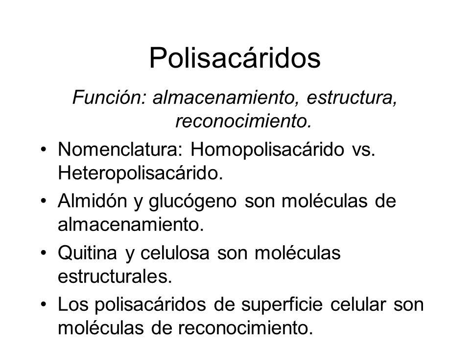 Polisacáridos Función: almacenamiento, estructura, reconocimiento. Nomenclatura: Homopolisacárido vs. Heteropolisacárido. Almidón y glucógeno son molé