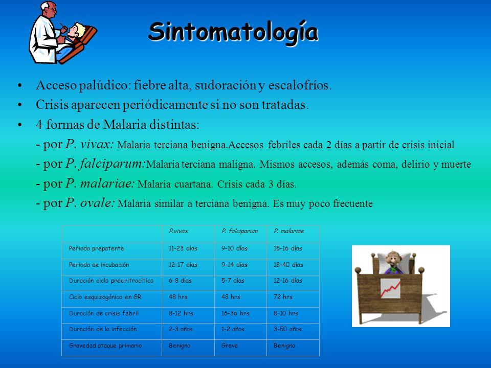 Sintomatología Acceso palúdico: fiebre alta, sudoración y escalofríos.
