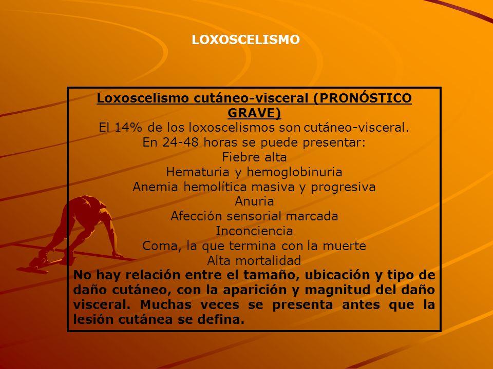 LOXOSCELISMO Loxoscelismo cutáneo-visceral (PRONÓSTICO GRAVE) El 14% de los loxoscelismos son cutáneo-visceral. En 24-48 horas se puede presentar: Fie