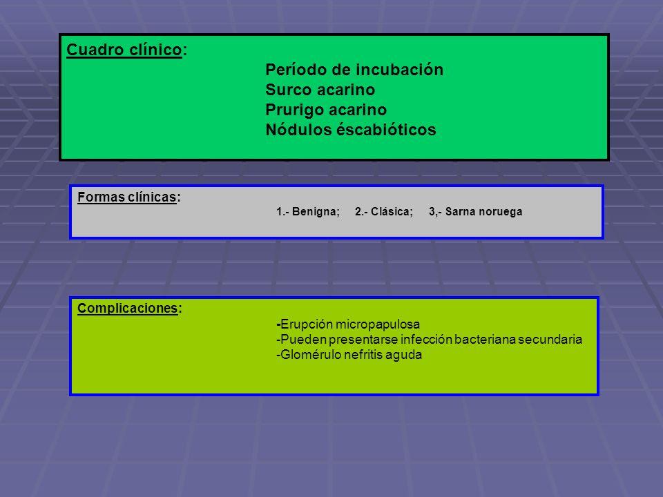 Cuadro clínico: Período de incubación Surco acarino Prurigo acarino Nódulos éscabióticos Formas clínicas: 1.- Benigna; 2.- Clásica; 3,- Sarna noruega
