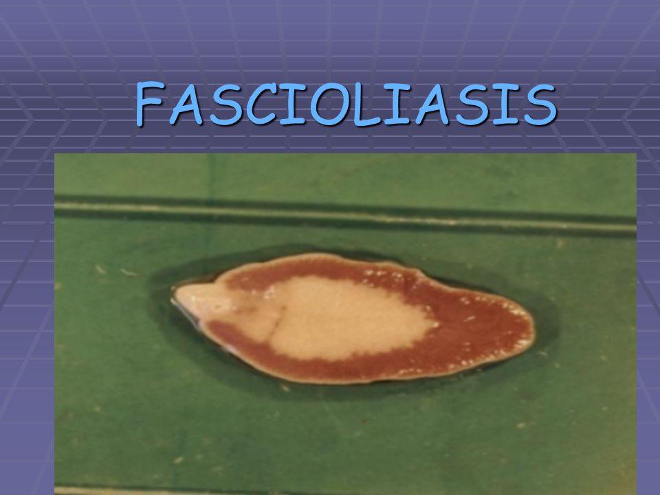 Sinónimo: Distomatosis hepática *Zoonosis parasitaria *Ciclo de vida indirecto *Huésped intermediario: Lymnaea sp.