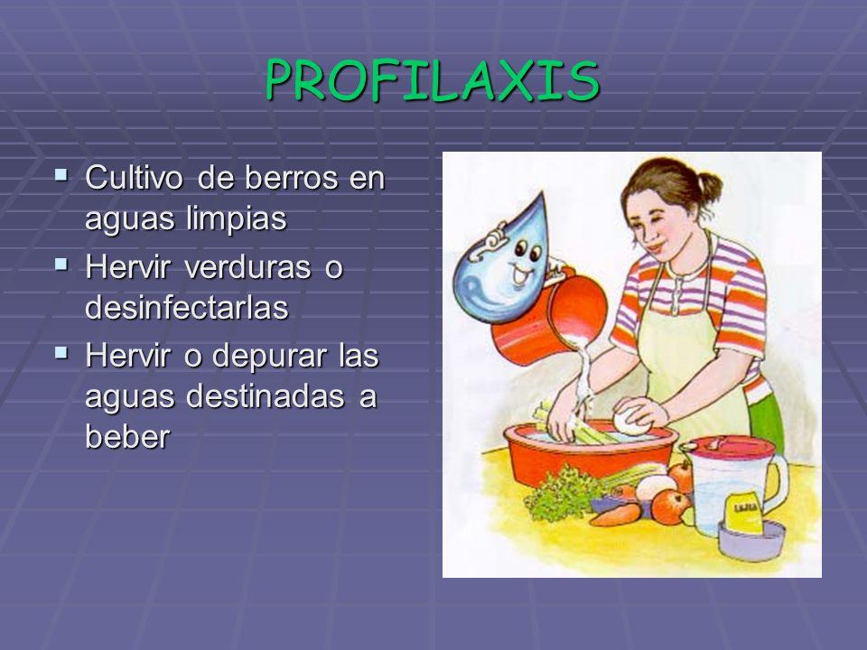 PROFILAXIS Cultivo de berros en aguas limpias Cultivo de berros en aguas limpias Hervir verduras o desinfectarlas Hervir verduras o desinfectarlas Her