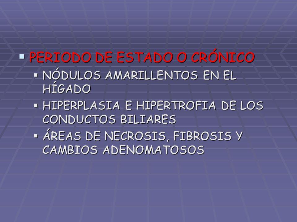PERIODO DE ESTADO O CRÓNICO PERIODO DE ESTADO O CRÓNICO NÓDULOS AMARILLENTOS EN EL HÍGADO NÓDULOS AMARILLENTOS EN EL HÍGADO HIPERPLASIA E HIPERTROFIA
