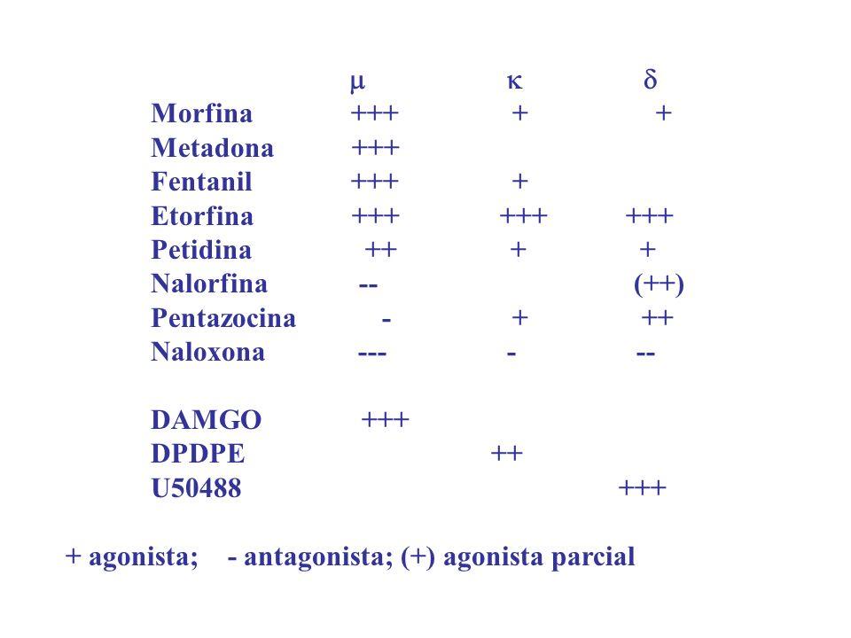 Morfina +++ + + Metadona +++ Fentanil +++ + Etorfina +++ +++ +++ Petidina ++ + + Nalorfina -- (++) Pentazocina - + ++ Naloxona --- - -- DAMGO +++ DPDP