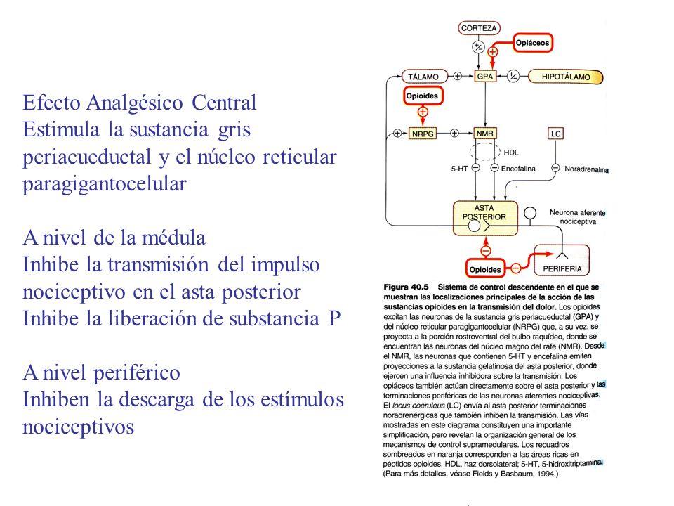 Efecto Analgésico Central Estimula la sustancia gris periacueductal y el núcleo reticular paragigantocelular A nivel de la médula Inhibe la transmisió